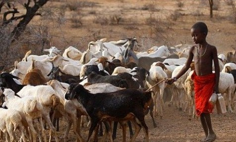 Sample Feasibility Study On Commercial Goat Farming
