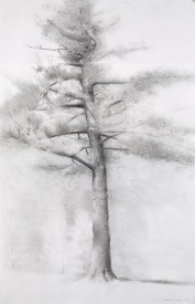 2007, charcoal and graphite on paper, 12 x 21 in.