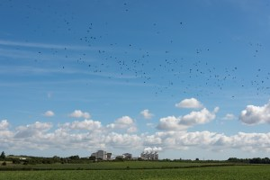 Rooks and cement works