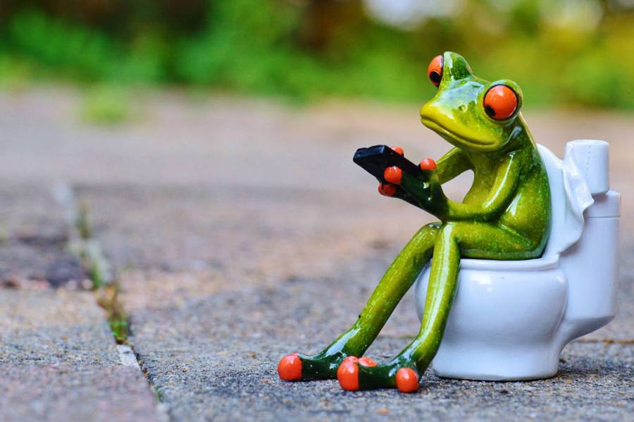 Frog sitting on a toilet