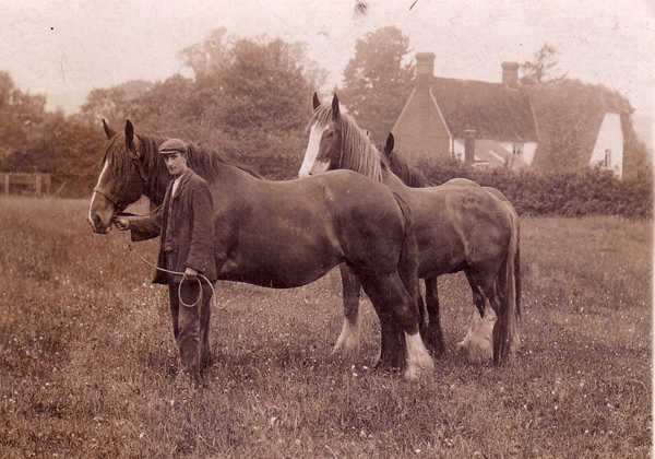 Horses at Builden End