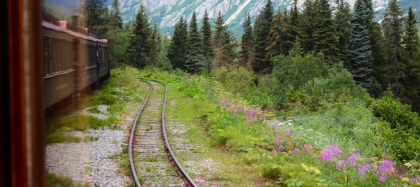 A train moving through an evergreen forest with flowers blooming by the tracks.