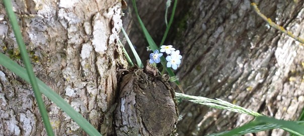 Four small blue flowers bloom on a tree trunk