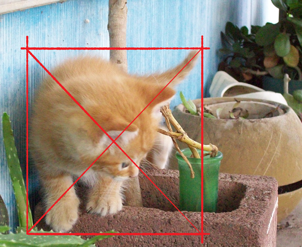 origional-kitty003b