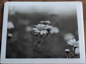 Photos of photos...