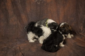 Fluff and Pups (135)