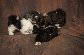 Fluff and Pups (141)