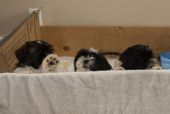 Fluff and Pups (5)