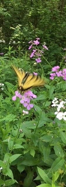 moth3-e1530965580753.jpg