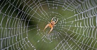 spider.animals.sandiegozoo.org