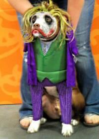Worst Halloween Superhero Costumesever.  chrislackiereview