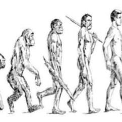 Diagram Of Evolution Timeline Amphibians Vs Reptiles Venn Human Chart For Kids