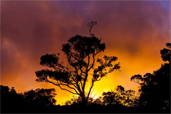 Sunset Landscape Photography Trees