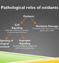 we have oxidative damage or cell signaling oxidative damage is the irreversible modification to macromolecules which are the large  [ 3000 x 2250 Pixel ]