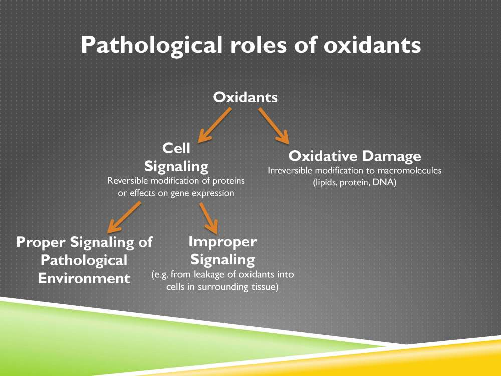 medium resolution of we have oxidative damage or cell signaling oxidative damage is the irreversible modification to macromolecules which are the large