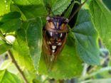 It's cicada time