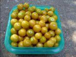 Ground cherries - deshucked
