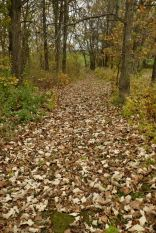 Our paths are more leaves than paths these days