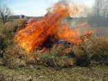 Burning the bamboo - feel warmer now?
