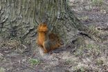 Boss Squirrel strikes a pose