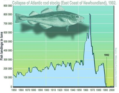 Newfoundland fisheries collapse.jpg