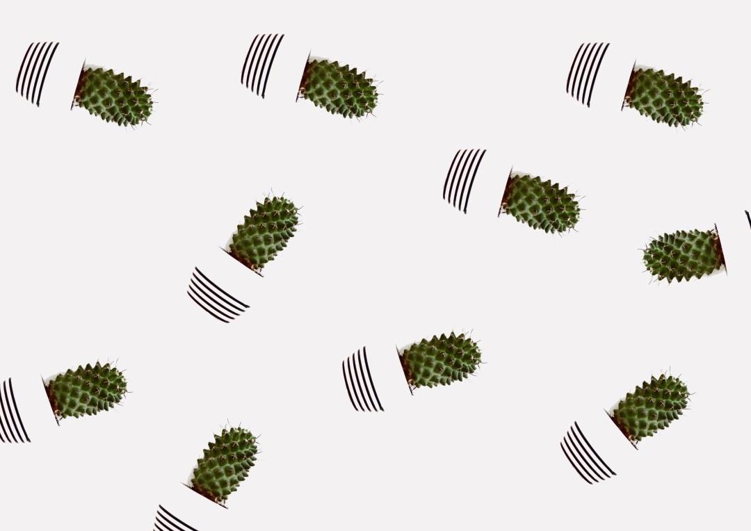 cactus-houseplant-plants-1856422