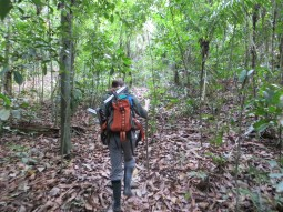 Studying ants in Panama