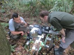 Studying ants in Panama with Matt Lutz