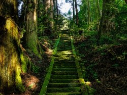 Woodland steps in Japan