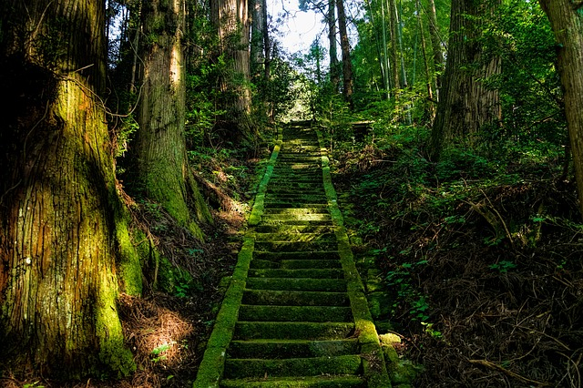 Woodland steps in Japan