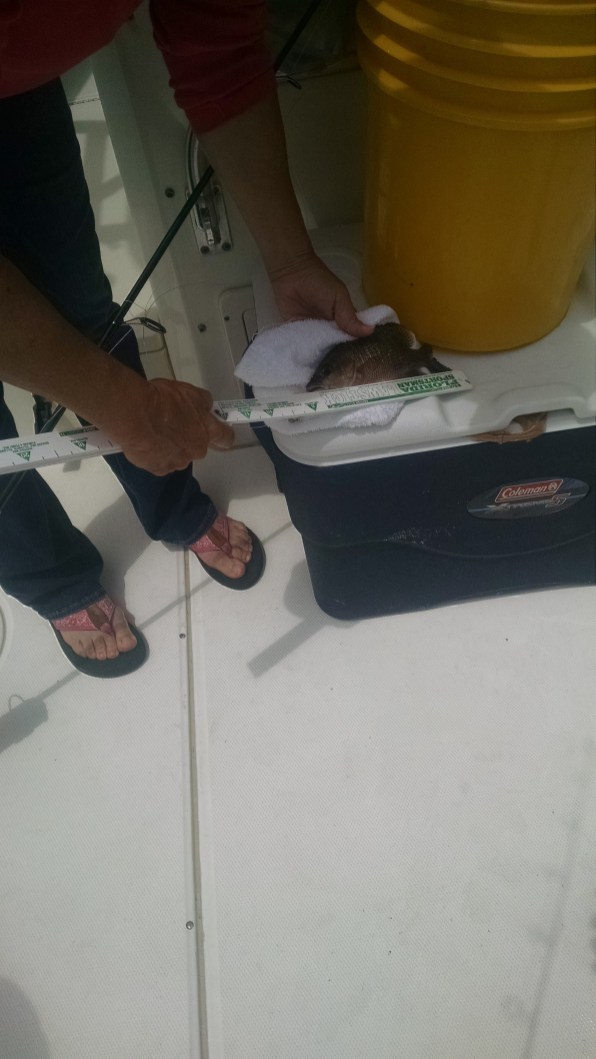 measuring fish