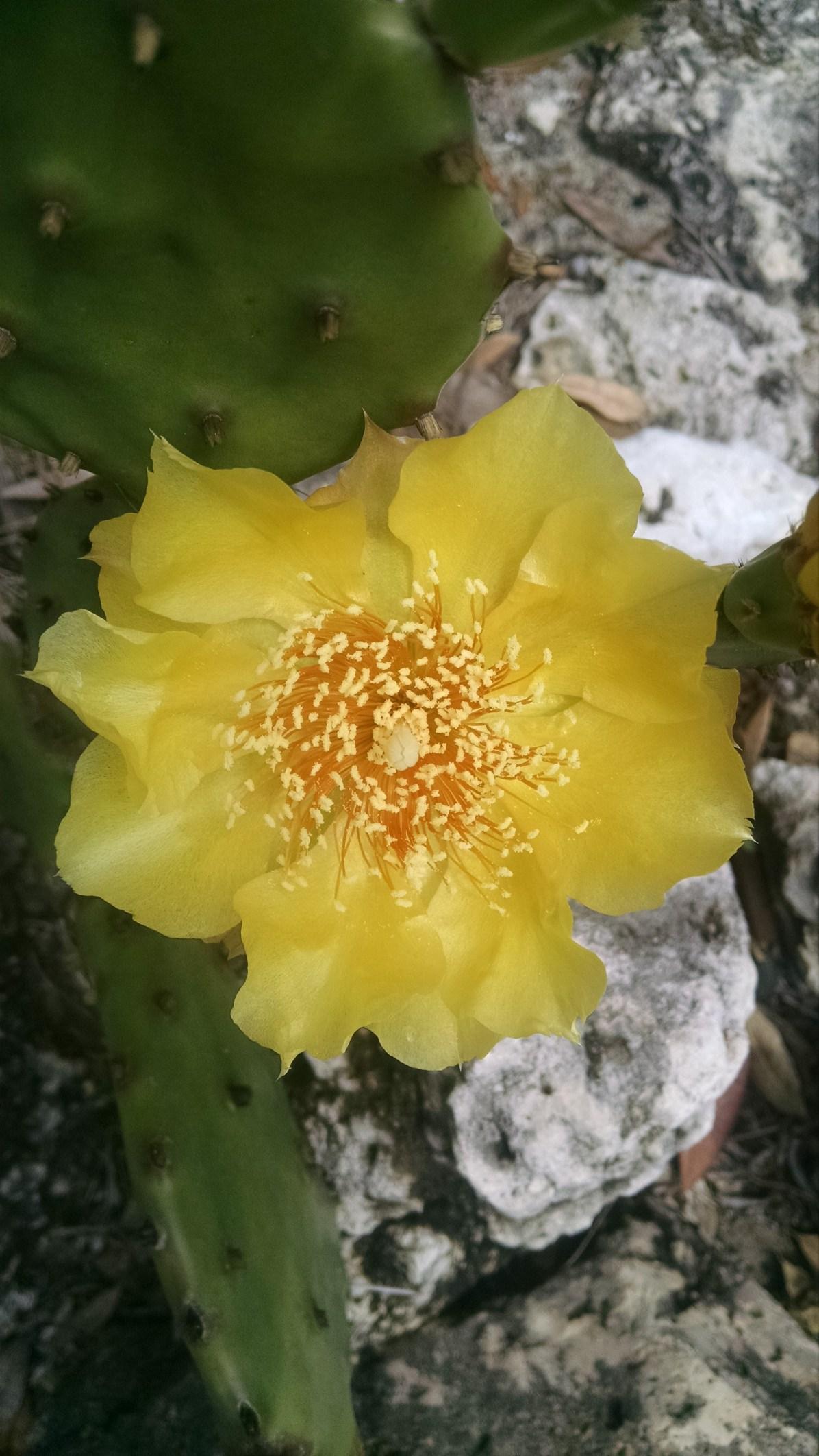 yellow cactus closeup