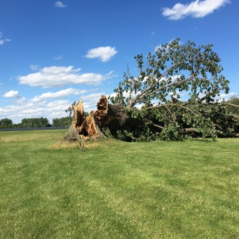 The tree of life in Houghton, NY. A sad day for many. The end of an era for sure.