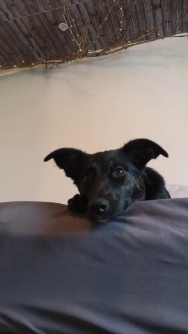 Ophelia the dog