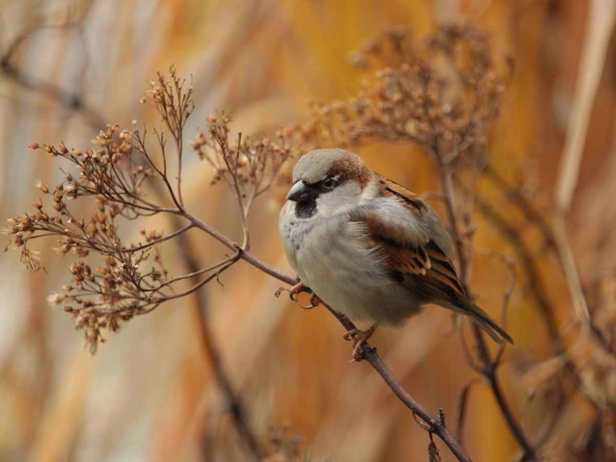 close up photo of brown bird
