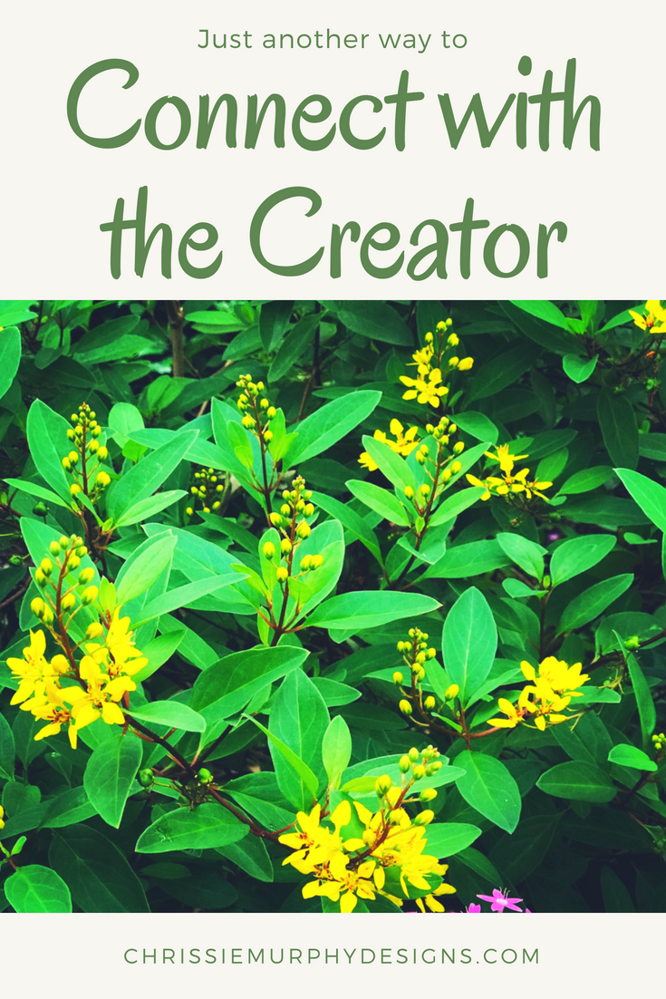 Connect with the Creator