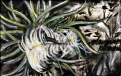 Drifter, 2010 (Charcoal Study)