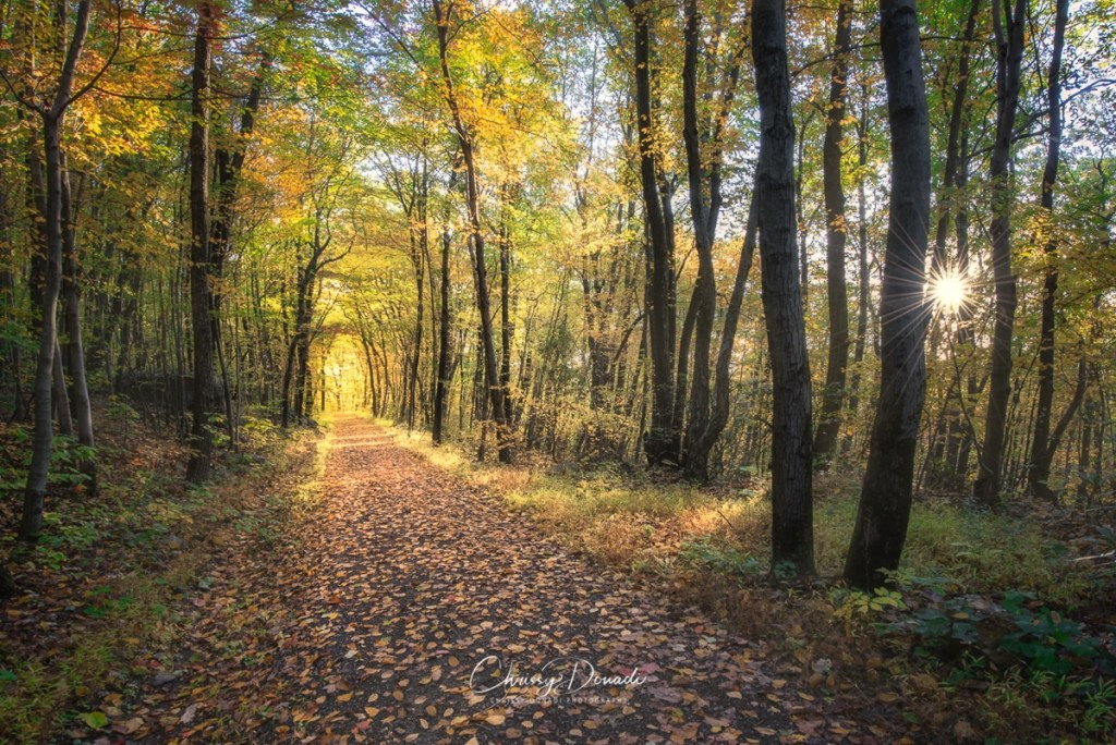 Autumn Sunrise on a Forest Trail in the Poconos of Pennsylvania