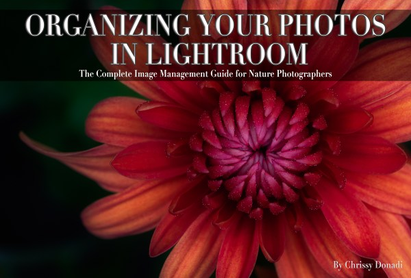 How to Organize Your Photos in Lightroom Tutorial Cover Image