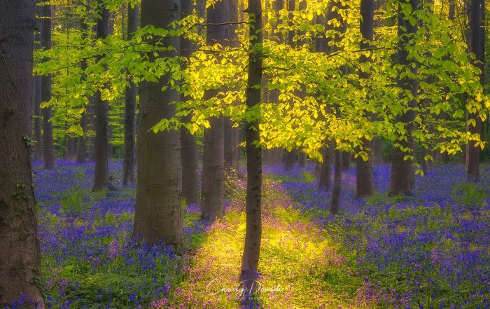 Photographing Bluebells Blog Post Cover Image