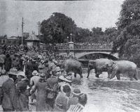 Circus elephants in the Avon