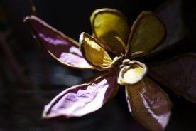Fleur de papier de soie