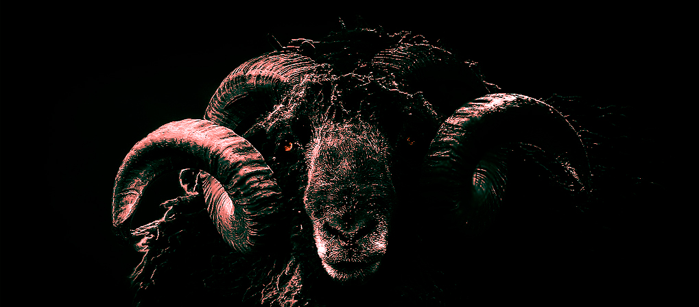 GOAT-WITH-HORNS-OF-A-RAM-1