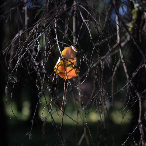 Ett löv hänger i ett träd