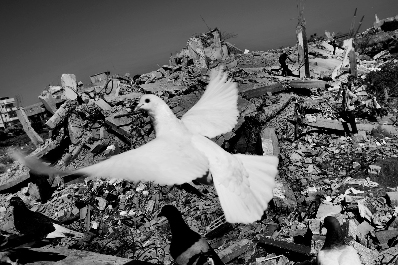 A dove takes off from one of the numerous ruins of Jabaliya in eastern Gaza City, while the residents are looking for their belongings in the background.