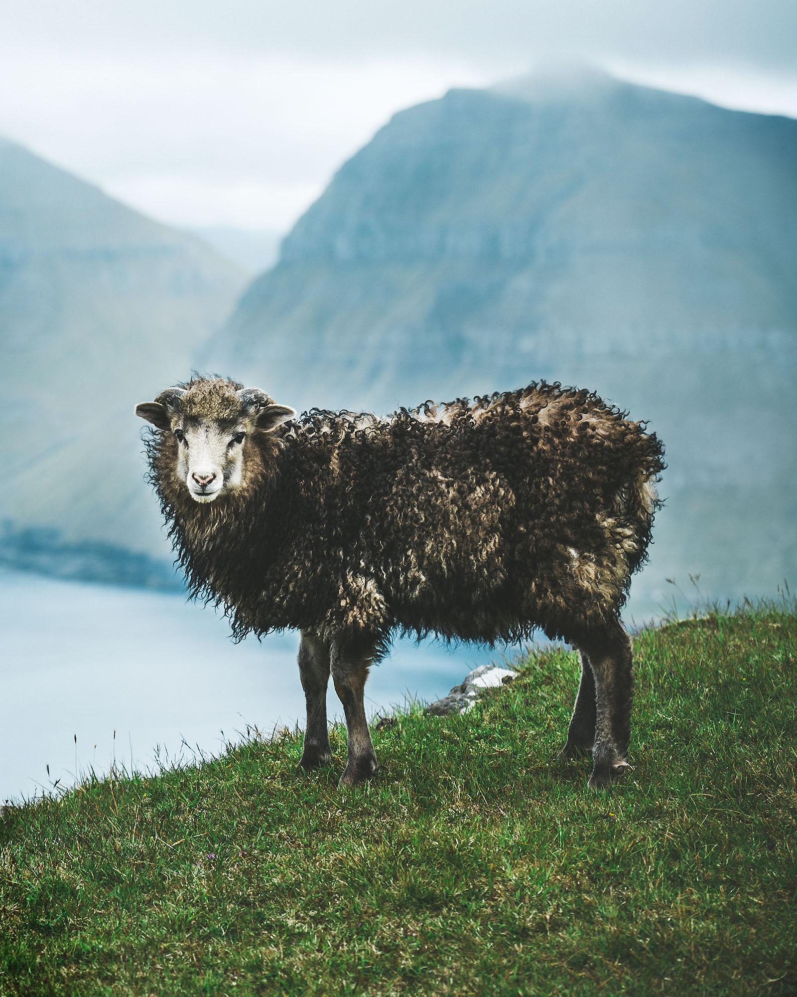Faroe017
