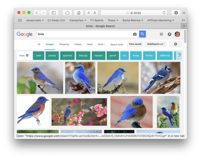 "Google image search results for ""birds"" restricted to blue"