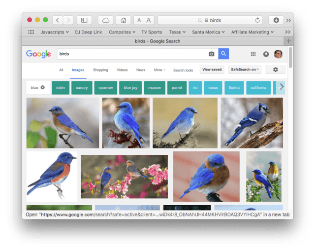 """Google image search results for """"birds"""" restricted to blue"""