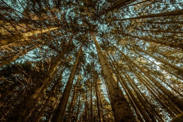 Mitten im Wald | Fujifilm | X-T1 | 12mm