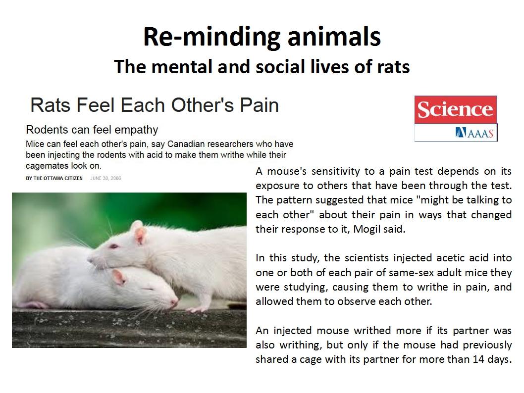 Presentation Animal Experimentation Bailey 2015_reminding rats